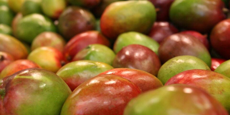 Artículo banano mango aguacate y etileno