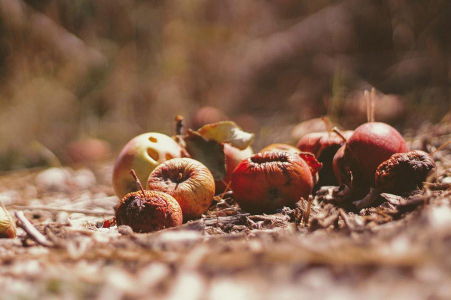 Alargar vidas fruta